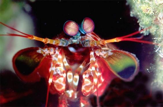 Olhos do camarão