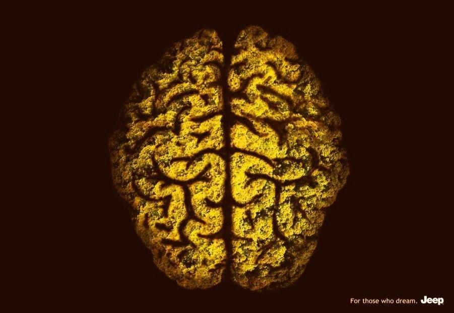 Cabeça e cérebro de jipeiro