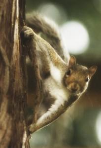 Esquilo - vida selvagem