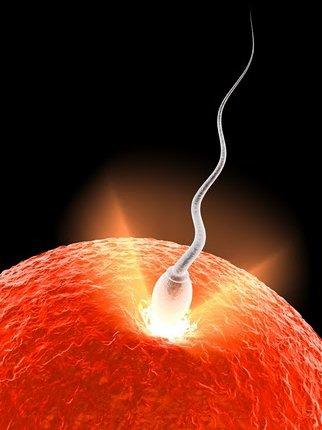 Cometa-espermatozóide
