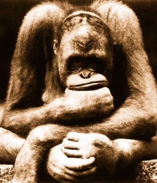 Macaco pensador
