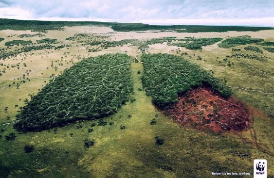 Ecologia - wallpaper do WWF