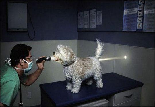 Cão - lanterna laser