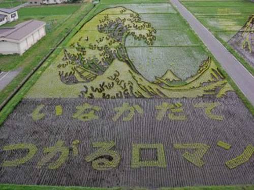 Tsunami - campo de arroz no Japão
