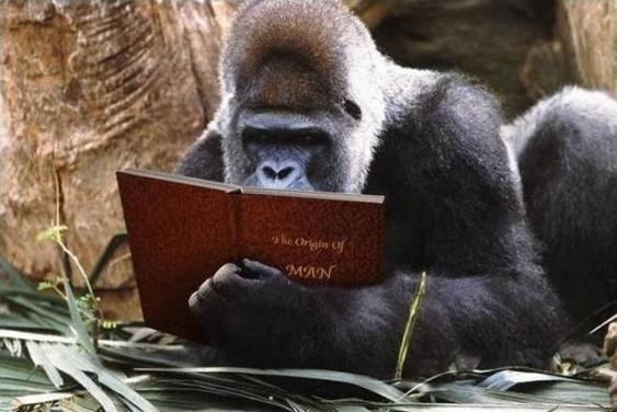 Macaco estudioso
