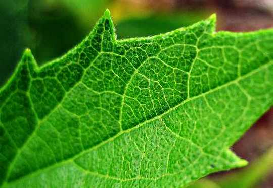 Folha artificial produz energia