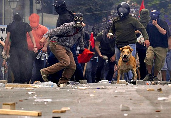 Cão grego em confronto com a polícia