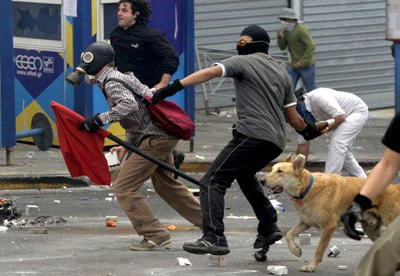 Viralata Loukanikos enfrenta polícia