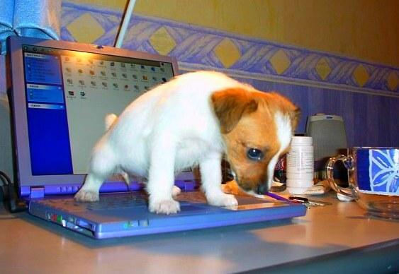 Cãozinho mijando no laptop