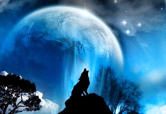 Lobo uivando - Lua Cheia