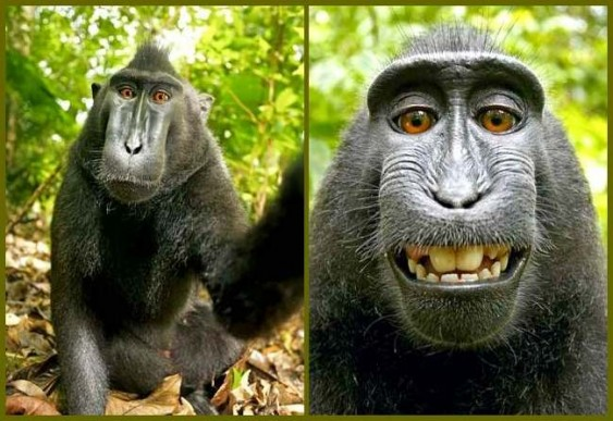 Macaco tira fotos