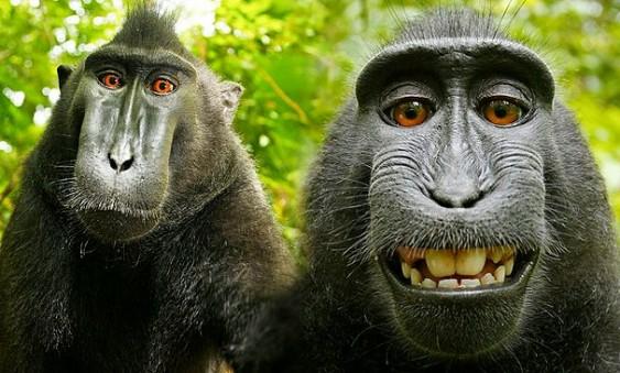 Auto-retrato do macaco