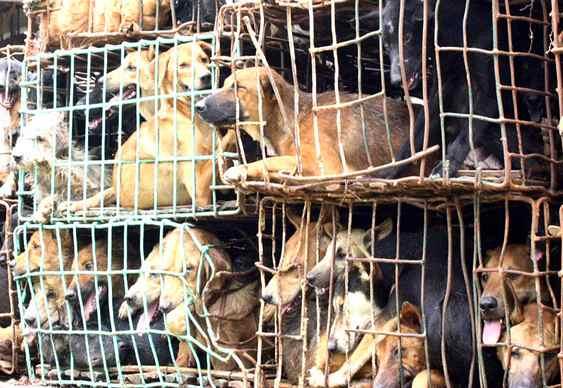 Carne de cachorro na culinária chinesa