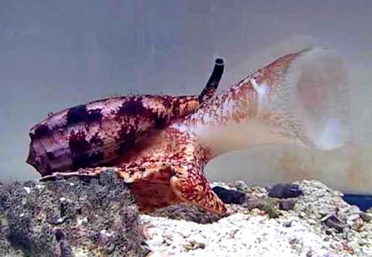 Boca de molusco