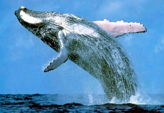 Cofrinho Baleia