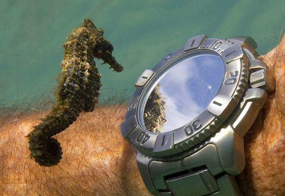 Relógio de mergulhador