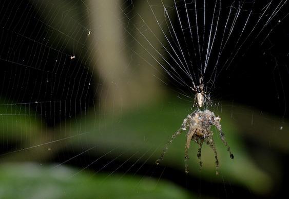 Aranha Escultora