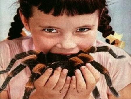 Pratos exóticos em insetos
