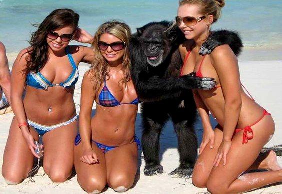Macaco com garotas na praia