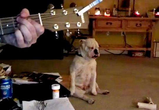 Cachorro surdo dançando
