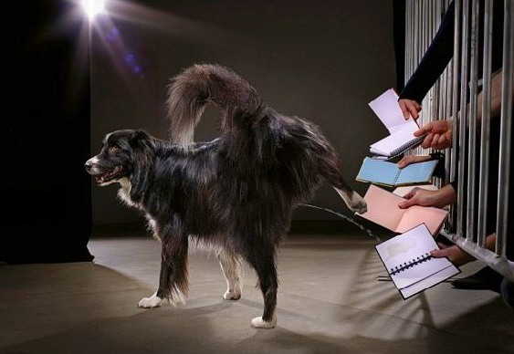 Autógrafo de cachorro