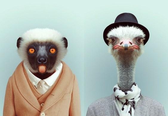 Moda para animais