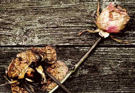Flores mortas