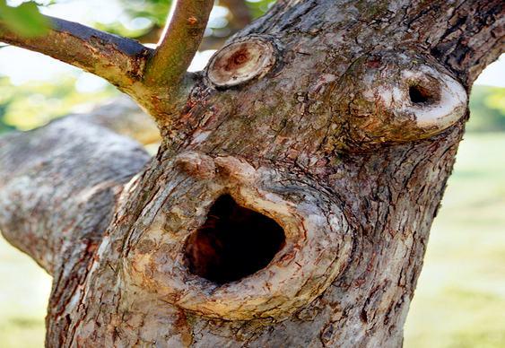 O grito das árvores