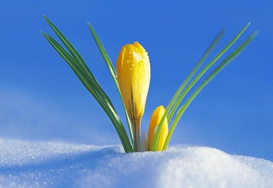 Plantas da Idade do Gelo