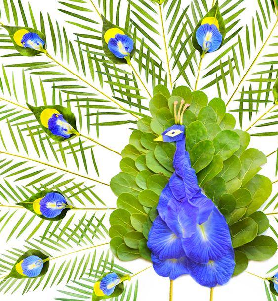 Pavão de Flores