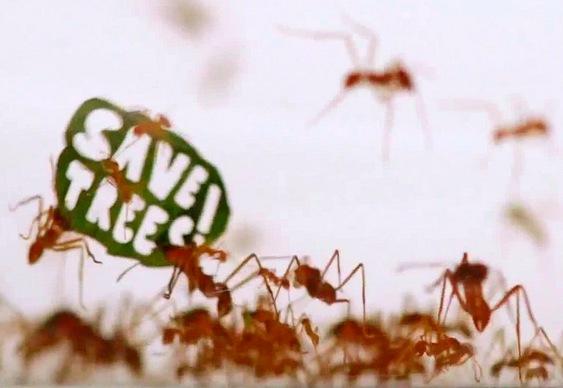 Manifestação das formigas