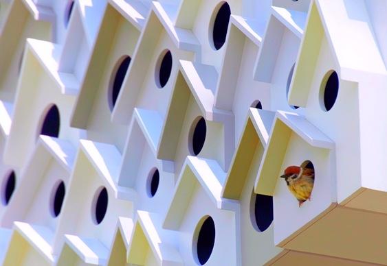 Casas para pássaros