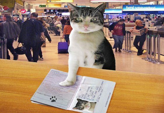 Passaporte animal estimação