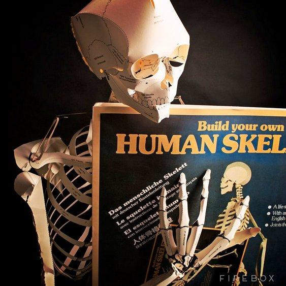 Kit caveira anatomia