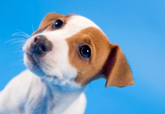Campanha adoção cães
