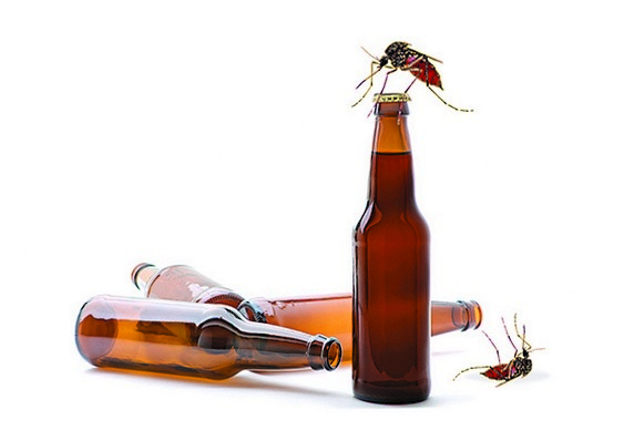 Cerveja combate mosquitos