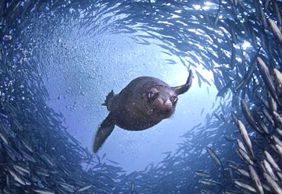 Túnel de peixes