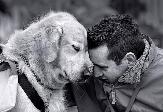 Cachorros adotam pessoas