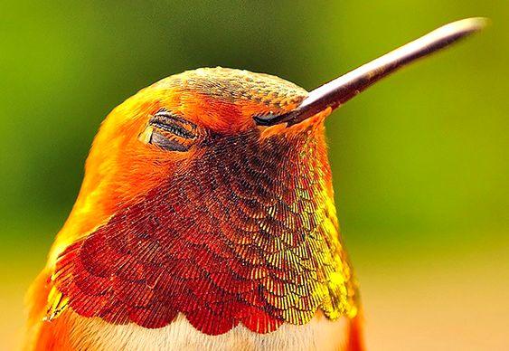 Foto bonita de passarinho