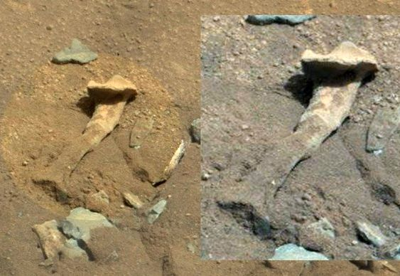 Osso de fêmur marciano