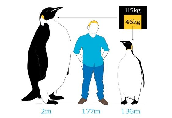 Pinguim jurássico
