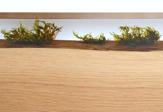 Prancha de madeira com musgo encapsulado em resina