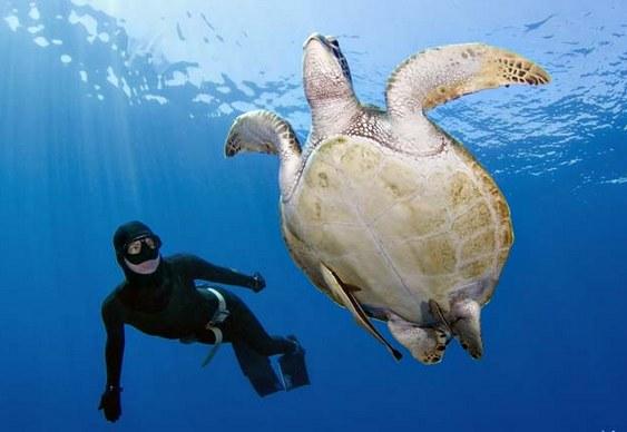 Preservação da tartaruga verde