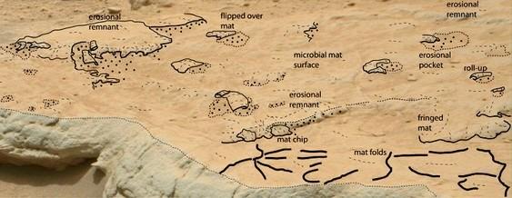 Micróbios marcianos