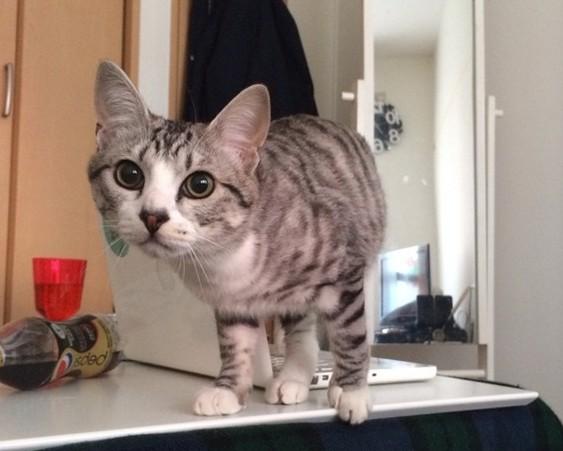 Brinco de gato