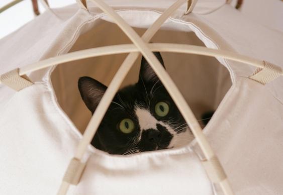 Abrigo de tecido para gatos