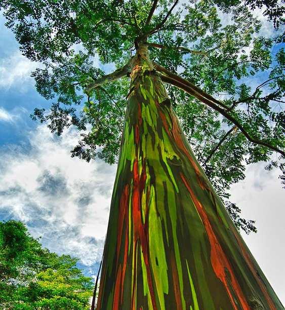 Madeira colorida natural