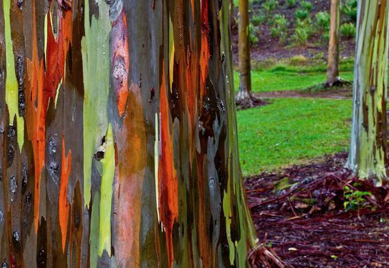 Tronco de árvore colorida