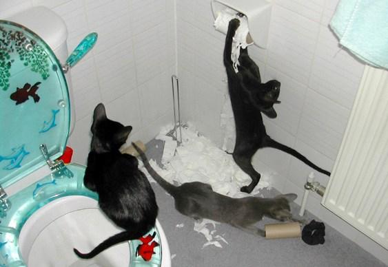 Gatos bagunçando o banheiro