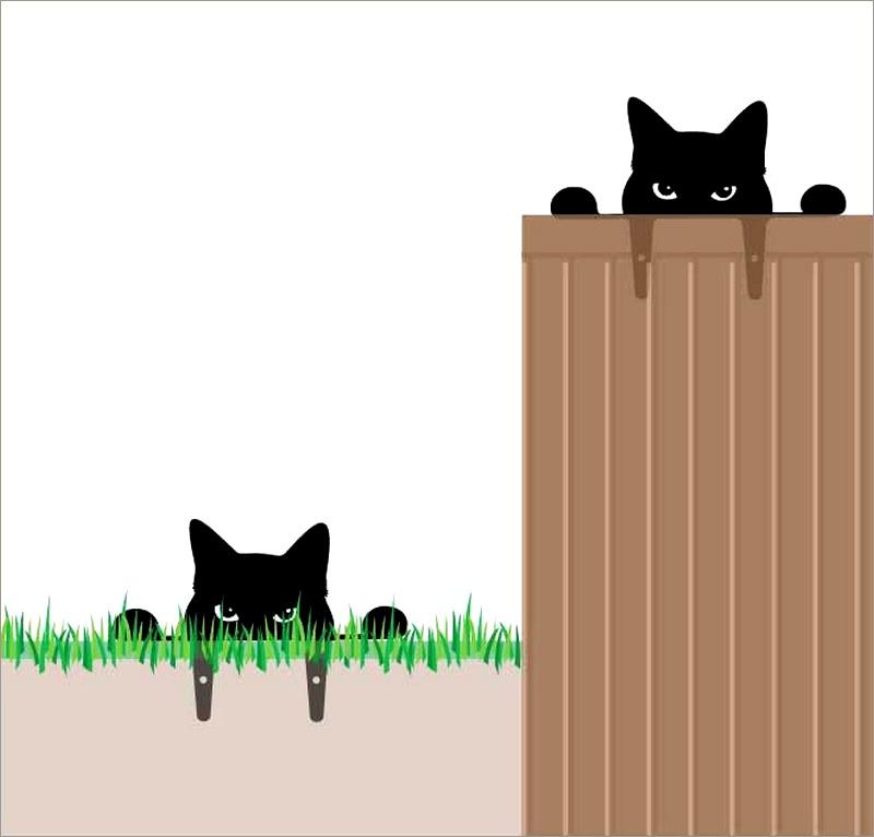 Gato preto